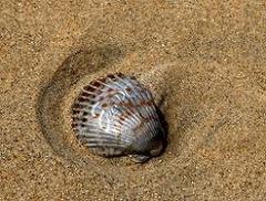 eee-pc-shell-mockup.jpg