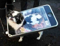 A dog and an Iphone
