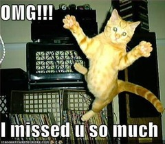 Greetings Were%20back%20lolcats-missed-u-thumb-240x210-92399