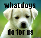 722 thumbcute-puppy-dog-wallpapers.jpg