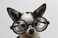 critical-thinking-dog.jpg