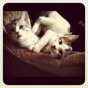 instagram-cat-1.jpeg