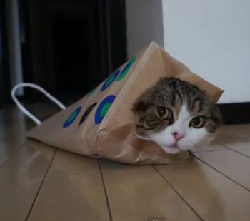 maru-the-catt.jpg