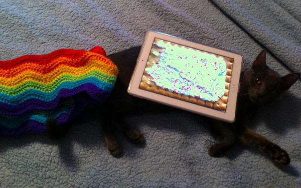 nyan-cat-marty.jpeg