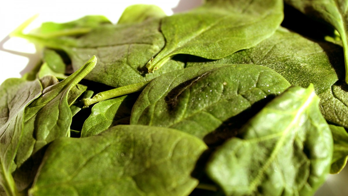 spinach-clean-energy-research