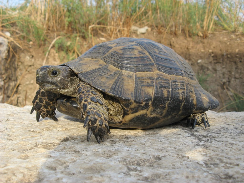 tortoises-use-touchscreens-research