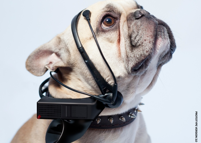 pet-wearables-no-more-woof