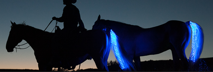 pet-wearables-tail-lights