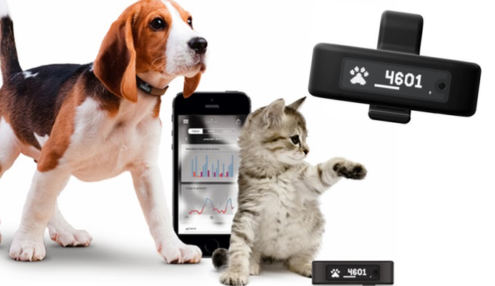 pet-wearables-tractive-motion