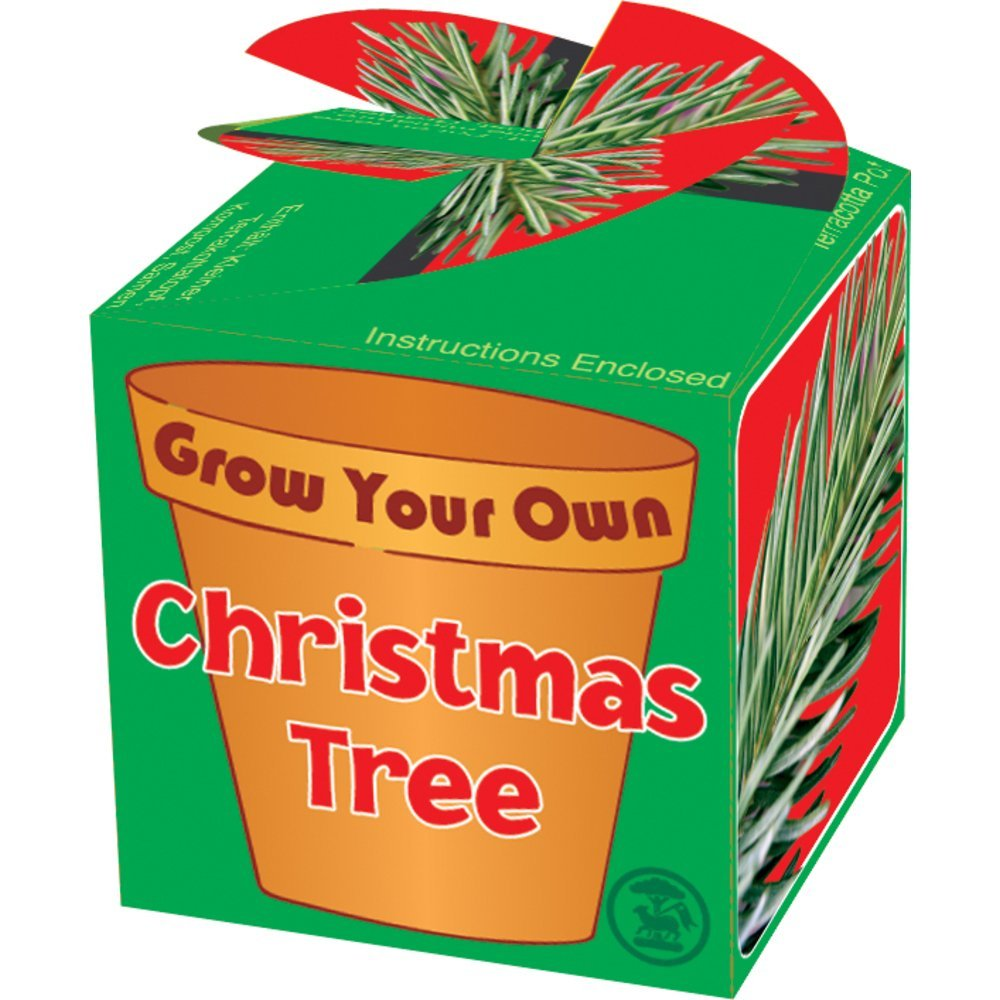 grow-your-own-christmas-tree