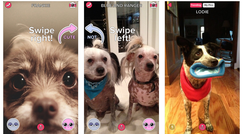 Cute or Not is BuzzFeed's first new app in years.