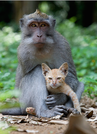 Macaque monkey and cat